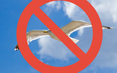 "6 Tips to Keep You from Becoming a ""Seagull Manager"""